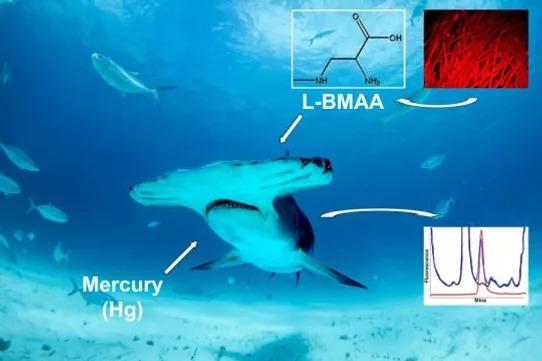 สารพิษในหูฉลาม